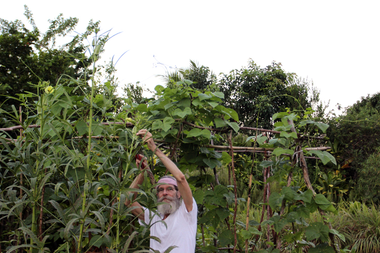 The author picking okra from his garden